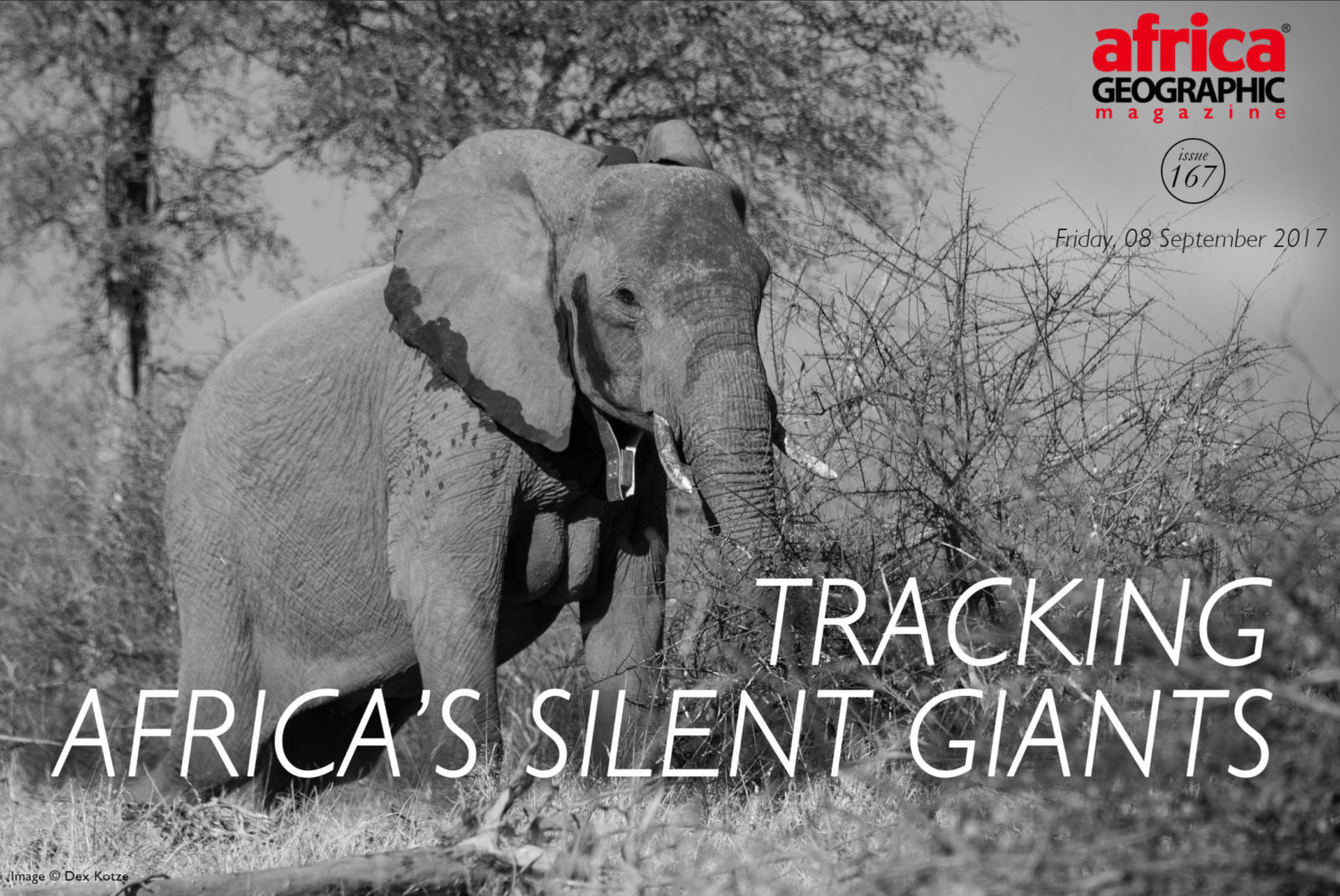 Tracking Africa's Silent Giants by Mardan Afrasiabi as pubished in Africa Geographic Magazine, photos by Dex Kotze
